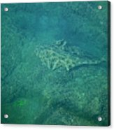 Under Water View Acrylic Print
