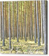 Underbrush. Acrylic Print
