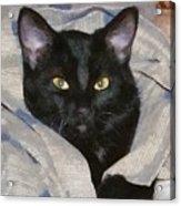 Undercover Kitten Acrylic Print by Jeff Kolker