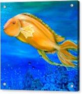 Undersea Journey Acrylic Print