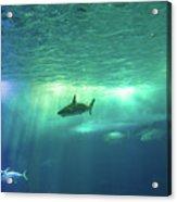 Undersea Scene Background Acrylic Print