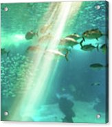 Underwater Background With Sunbeams Acrylic Print