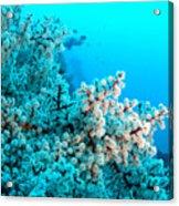 Underwater Cherry Blossom Acrylic Print