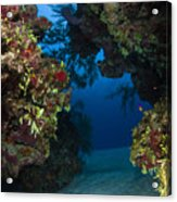 Underwater Crevice Through A Coral Acrylic Print