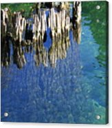 Underwater Cypress Stump Acrylic Print