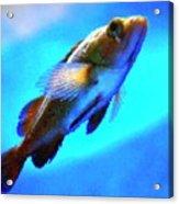 Underwater Levity Acrylic Print