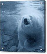 Underwater Playground Acrylic Print