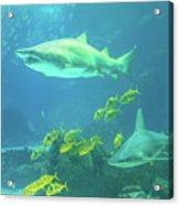 Underwater Shark Background Acrylic Print
