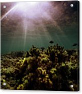 Underwater Sunset Acrylic Print
