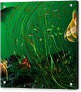 Underwater Wonderland  Diving The Reef Series. Acrylic Print