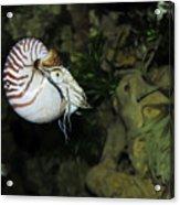 Underwater01 Acrylic Print