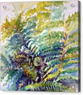 Unfurling Ferns Acrylic Print