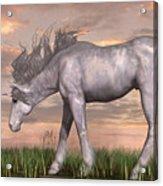 Unicorn And Chipmunk Acrylic Print