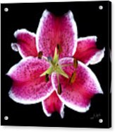 Unique Lily In Fushia Acrylic Print