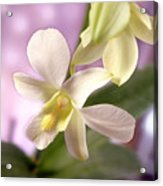 Unique White Orchid Acrylic Print by Mike McGlothlen