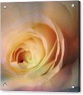 Universal Rose Acrylic Print