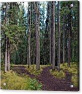 University Of Alaska Fairbanks Trail System Acrylic Print