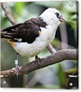 Unknown White Bird On Tree Branch Acrylic Print