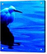 Unseen Chain Of Egret Acrylic Print
