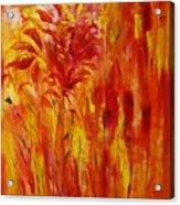 Untitled 20x24 Acrylic Print