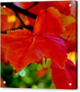 Up Close And Colorful Acrylic Print