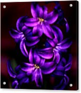 Up Close And Purple Acrylic Print