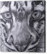 Up Close Clouded Leopard Acrylic Print