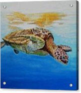 Up For Some Rays Acrylic Print