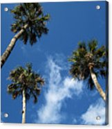 Up To The Sky Palms Acrylic Print