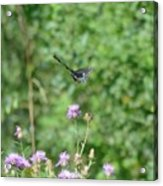 Up, Up And Away-black Swallowtail Butterfly Acrylic Print