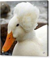 Updo Duck Acrylic Print
