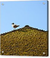 Upon The Roof Acrylic Print