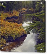 Upper Salamander Creek Acrylic Print