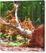Uprooted Trees Acrylic Print