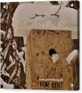 Upscale Bird Loft For Rent Acrylic Print