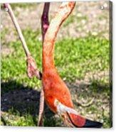 Upside Down Flamingo Acrylic Print