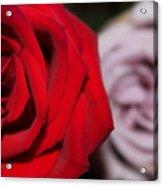 Upstaged Rose Acrylic Print