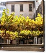 Urban Bower. Milan, Italy. Acrylic Print