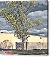 Urban Cottonwood Acrylic Print