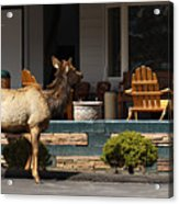 Urban Elk Acrylic Print