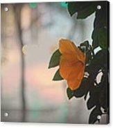 Urban Flora Acrylic Print