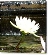 Urban Lily Acrylic Print