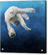 Ursus Maritimus One Acrylic Print