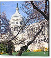 Us Capitol Building And Cherry Acrylic Print