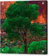 Utah - Cottonwood Acrylic Print