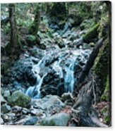 Uvas Canyon Waterfall I Acrylic Print