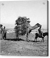 Uzbekistan: Caravan, C1910 Acrylic Print