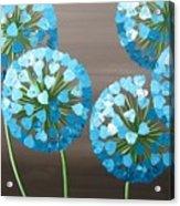 Valentine Alliums Acrylic Print