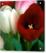 Valentine Tulips Acrylic Print