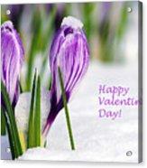 Valentines Day Crocuses Acrylic Print